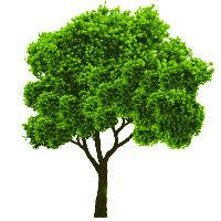 大树上的幸福