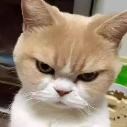 忍不住的一只猫